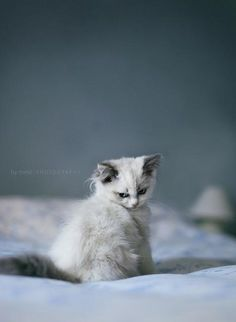 """""""Cats will allow you to sleep on the bed--on the edge."""" --Jenny DeVries"""