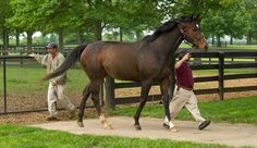 Rachel Alexandra, once a horse of the year, was back at Stonestreet Farm after being hospitalized for a postpregnancy infection. Credit Jonathan Palmer for ...