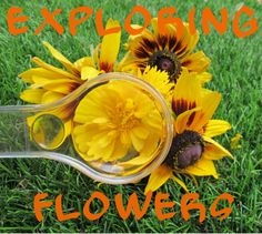Exploring flowers with kids