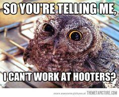 Skeptical Owl on job hunting…