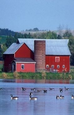 Barn and Ducks on the Pond