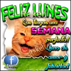 Postales Para Compartir.: FELIZ LUNES!!