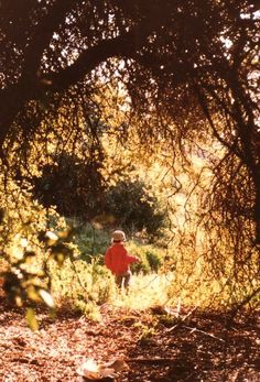 NATURE'S NEURONS: Do Early Experiences in the Natural World Help Shape Children's Brain Architecture?  Richard Louv