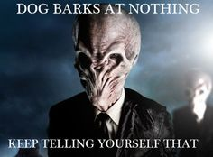 What's the Dog Barking At?