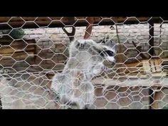 Еноты в Зоопарке Тбилиси - YouTube Youtube, Youtubers, Youtube Movies