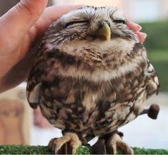 happy baby owl