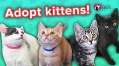 Adopt Stailey, George, Bren, & Cho! // Adoption Featurette… #funnypetvideos #funnyanimals