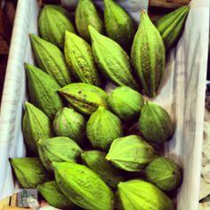 Mito o Papaya silvestre