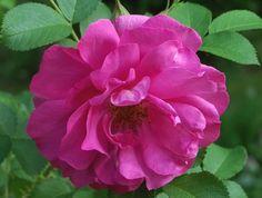 Wild Edric Flowers, Plants, Florals, Plant, Flower, Bloemen, Planting, Planets