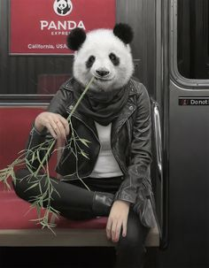 """Recent work by American artist Matthew Grabelsky. """"New York City is sometimes affectionately (or disaffectionately) referred to as a 'concrete jungle', but for Los Angeles-based… New York Subway, Nyc Subway, Panda Wallpapers, Panda Art, Art Calendar, U Bahn, Art En Ligne, Colossal Art, Surrealism Painting"""
