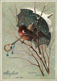 Today I'm sharing this Old Songbird Robins in Snow Graphic! In this New York BonBon Candy Advertisement, a male and female American Robin sit under an ornate white and teal umbrella as snow swirls around them. Sitting on bare branches, he has a beautiful reddish rust chest and she is grayish tan. Both have an aqua...Read More »