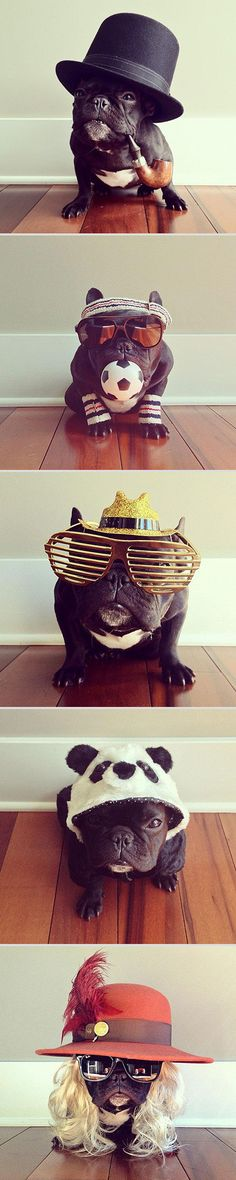 "While Norm might be the pug with the best selfies on the Internet, Trotter is definitely the master of disguise among the French Bulldogs! With more than 165,000 followers on Instagram, this San Francisco-based hipster pup keeps surprising her fans with new and adorable outfits, picked by her owner Sonya Yu. ""We've been training her since she was young so she's really a photo-ready dog. She is very good about posing. She just stands still,"" says Sonya."