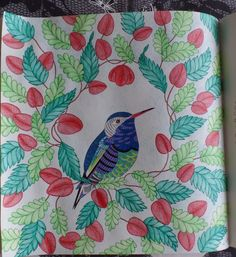 Millie Marottas Animal Kingdom Colours By Me Colour TherapyAnimal Books Stress RelieverAdult ColoringColoring