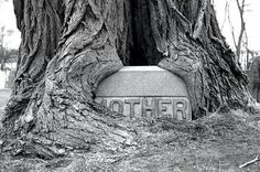 "HAS THIS TREE OVERGROWN THE STONE THAT ONCE READ:  ""MOTHER"".....MY GOODNESS, MOTHER NATURE IF REALLY POWERFUL..............ccp"