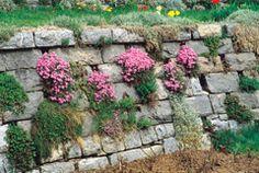 Kuvahaun tulos haulle muuri aita kasvi