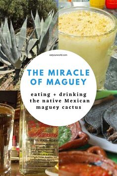 From tequila to pulque, food prep to antibiotics, the native Mexican maguey (agave) plant is a star of ancient Aztec and modern Mexican civilization. Learn how to eat and drink this incredible desert plant. #maguey #mexico #mexicanculture #azteccivilization #agave Traditional Mexican Dishes, Low Glycemic Diet, Meal Prep, Food Prep, Drinking Around The World, Best Dishes, Healthy Dishes, Foodie Travel, So Little Time