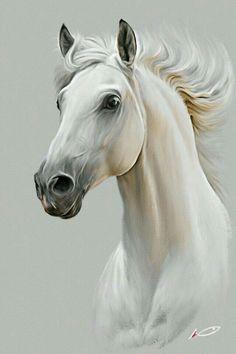 Horse by irudd on DeviantArt - Pferd Pretty Horses, Horse Love, Beautiful Horses, Pale Horse, Majestic Horse, Horse Drawings, Animal Drawings, Art Drawings, Horse Head Drawing