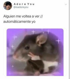 humor laughing so hard nailed it ~ humor laughing so hard nailed it _ humor hilarious laughing so hard nailed it _ funny quotes humor laughing so hard nailed it Humor Mexicano, Animal Jokes, Funny Animals, Memes Humor, Funny Jokes, Ecards Humor, Humor Videos, Humor Quotes, Memes Do Twitter