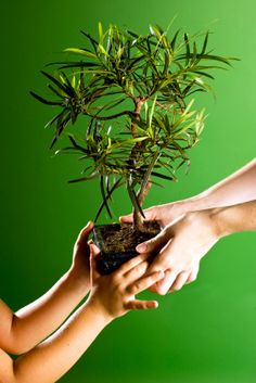 Jewish Arbor Day?!? What a fabulous idea. How can I celebrate Tu B'Shevat with Rubes in the depths of an Indiana winter?