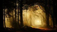 The Secret Forest by Nelleke.deviantart.com on @deviantART