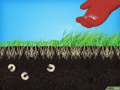 How to Remove White Grubs from Lawns. White grubs are the larvae of various beetles that feed on the fibrous roots of turf grass, causing your lawn to grow brown spots. There are lots of ways you can get rid of these pests, from using a.