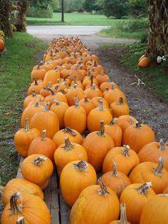 se acerca halloween