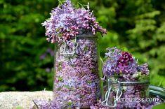 Herbatka z kwiatka czyli karmelowy smak lilaka