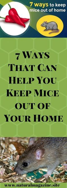 Even though mice are Join Our Facebook Group