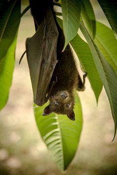 cute bat just hanging around