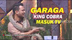 GARAGA The King Cobra Masuk TV   INI BARU EMPAT MATA (19/12/19) Part 5 King Cobra, Youtube, Broadway Shows, 1, Trends, Popular, Popular Pins, Youtubers, Youtube Movies