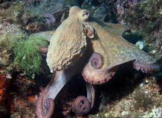 Delightful octopus