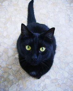 Cat, Black, Eyes, Green