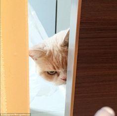 【画像】ダークサイドに堕ちたような眼差しの日本のネコが海外で話題に | ワロタニッキ