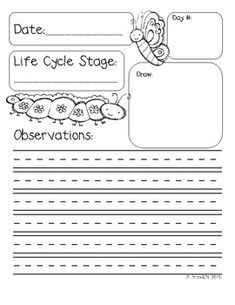 life cycle of the butterfly observation journal