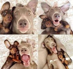 The best of dog selfies.