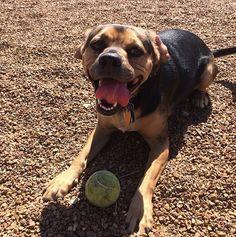 Park? Check. Tennis ball? Check. - Bear Creek Park - Columbia, MO - Angus Off-Leash