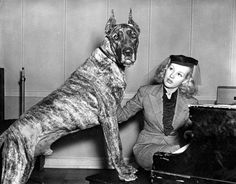 Betty Grable with her Great Dane.  So many old hollywood actressed had them...odd.  I want one and shall name him Spartacus.