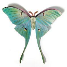 45 Luna Moth V2 Papercut Decoration By Candygears On Etsy