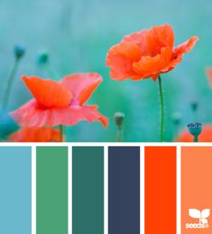 Love the teal/orange contrast. Good bathroom colors for the kids bathroom. Bright and fun!