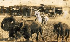 Cody demonstrates hunting buffalo