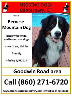 "Granite State Dog Recovery Page Liked · September 11, 2014 · Edited ·     Reunited! Max is home!  Missing in Canterbury CT – ""Max"" is a male Bernese Mountain Dog, black with white and brown markings, 2 years and 100 pounds. He is a friendly guy. Missing since 9/9/2014 from Goodwin Road. Please share his flier. Call (860) 271-6720 or (860) 546-6859 if seen or found"