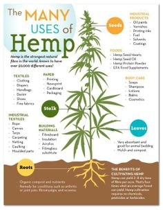 HEMP CANNABIS SUSTAINABILITY