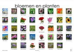 bloemen plaat