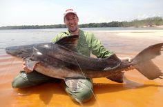 Piraíba que meu irmão Pedro fisgou no Rio Negro, Amazonas. Peixe de 1,60m e peso estimado em mais de 50kg.