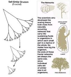 fractal trees and networks Metabolism, Fractals, Cosmos, Evolution, Alternative, Trees, Book, Tree Structure, Outer Space