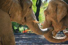 22 curiosidades sobre a sexualidade dos animais