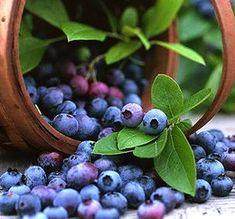 Черника, лесной врач, витамины, здоровое питание