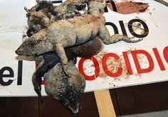 """""""ECOCIDIO"""": Así se llama a la destrucción del Manglar Tajamar. Capitalismo es devastación y muerte."""