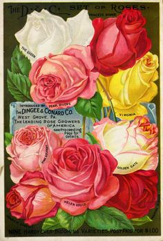 Rose Digital Collage Sheet Digital by CharmedMemoryCollage Decoupage Tins, Decoupage Vintage, Napkin Decoupage, Garden Catalogs, Seed Catalogs, Vintage Cards, Vintage Images, Clock Wallpaper, Vintage Seed Packets