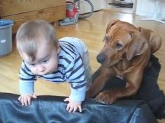 The Little Boy Tries Climbing Into The Dog Bed. What The Dog Does Is TOO Precious! - Hearts Of Pets